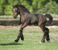 WR Miss Q Baby Horses, Cute Horses, Draft Horses, Pretty Horses, Wild Horses, Cute Baby Animals, Farm Animals, Funny Animals, Most Beautiful Horses