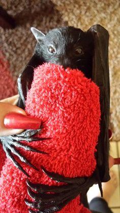 Flying Fox Baby Bat in rehab