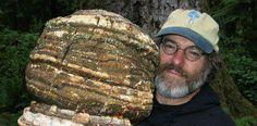 Un champignon pour faire tomber les insectes… et Monsanto ! Le brevet qui dérange.