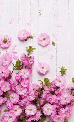Spring flowers wallpaper flower wallpaper pinterest spring iphone wallpaper flowers mightylinksfo