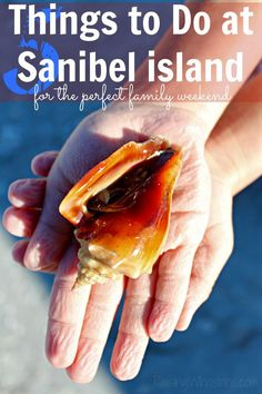 Things to do at Sanibel for the perfect family weekend