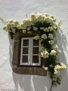 portuguese window  (okay, it's actually *exterior*, but still, pretty!)