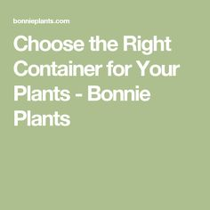 Choose the Right Container for Your Plants - Bonnie Plants