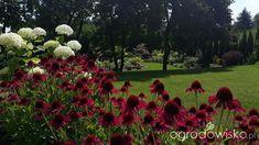 Mój ogrodowy pamiętnik - strona 805 - Forum ogrodnicze - Ogrodowisko Fruit, Plants, Plant, Planets
