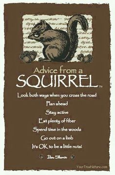 Spirit animal totem advice from a squirrel. Advice Quotes, Me Quotes, Funny Quotes, Wisdom Quotes, Irish Quotes, Daily Quotes, Animal Spirit Guides, Spirit Animal, Great Quotes