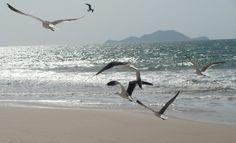 As gaivotas formam um balé ...