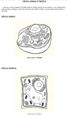 Printable Plant Cell Diagram