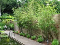 bambus sichtschutz auf terrasse & balkon | bambusbörse, Garten und erstellen