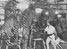 tiger in the menagerie poem - Google'da Ara