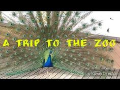 YouTube a trip to the zoo Videos, Youtube, Animals, Animales, Animaux, Animal, Animais, Youtubers, Youtube Movies