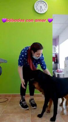 Cuando amas lo que haces Dog Grooming, Dog Toys, Grooming Dogs