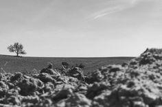 #lackoj #nature #tree #lonelytree #onthehorizon # thru the #field #view  #iphone7 #soblahov #slovakia