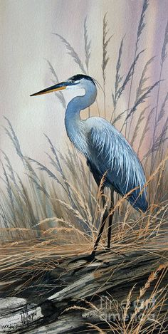 Canvas Art, Canvas Prints, Art Prints, Canvas Painting Nature, Nature Artwork, Art Nature, Nature Paintings, Watercolor Bird, Watercolor Paintings