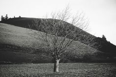 LEAFLESS TREE. Azores 2012