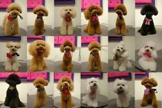 japanese dog grooming styles all cutie pies!