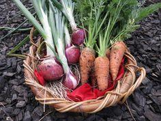 November 2012 Produce from our garden! Kitchen Columns, Wine Recipes, Stuffed Mushrooms, November, Strawberry, Fresh, Vegetables, Garden, Food