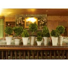 Napa Home & Garden Preserved Boxwoods Preserved Greens 8 Piece Assortment - 7507-PG