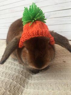 Carrot hat for rabbit pet Hand Knitting, Knitting Patterns, Rabbit Accessories, Minion Hats, Rabbit Costume, Pet Halloween Costumes, Bunny Hat, Pet Rabbit, Animals Beautiful
