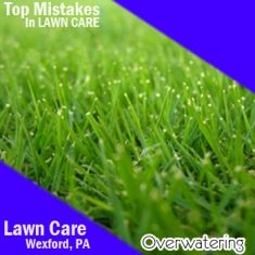 Water your lawn properly so that grass will grow deep roots.