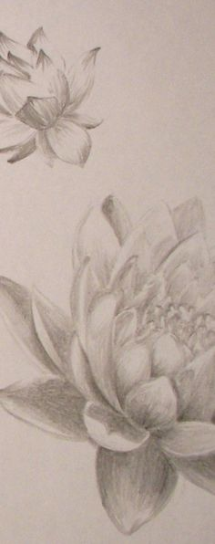 S - LOTUS TATTOO DRAWING for Craig's chest/shoulder (pencil)