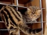 What This Family of Adorable Kittens Does Together is Heart Melting ♥