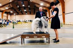 Gold Country Kennel Club annual Labor Day weekend dog show, photo by Lenkaland Photography City Events, Local Events, Grass Valley, Nevada City, Dog Show, Outdoor Activities, Things To Do, Club