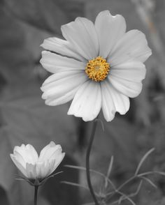 White Flower, 2014