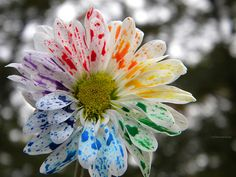 Rainbow splattered flower.