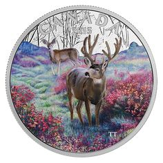 Fine Silver Coloured Coin – Misty Morning Mule Deer – Mintage: Mint Coins, Silver Coins, Canadian Coins, Valuable Coins, Coins For Sale, Mule Deer, Commemorative Coins, Majestic Animals, Smileys
