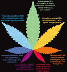 Ever wonder what the difference is between THC, CBD, CBC, THCV, CBG?  Nice! Real medicine , thats what we are all about as well #leafedin.org  http://thehempoilbenefits.com