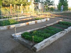 Raised Beds Out Of Railroad Ties. This Looks Just Like My Gardens. :0