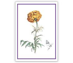 Klassicher Nelken Blumengruß für Glückwünsche - http://www.1agrusskarten.de/shop/klassicher-nelken-blumengrus-fur-gluckwunsche/    00001_0_21, Blumen, Geburtstags Blumen, Glückwunschkarten, Grußkarte, Klappkarte00001_0_21, Blumen, Geburtstags Blumen, Glückwunschkarten, Grußkarte, Klappkarte