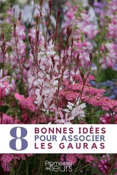 Gaura lindheimeri : 8 idées d'associations réussies - Diy Garten Plants, Gaura, Organic Gardening, Landscape Trees, Garden Lovers, Garden Tags, Hydrangea Care, Flower Garden, English Garden