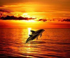 Dophins at sunset...