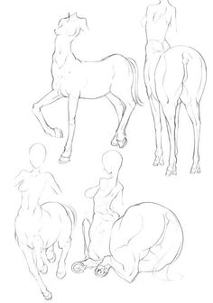 Body Sketch: Centar Body with Pose. Creature Drawings, Animal Drawings, My Drawings, Figure Drawing Reference, Art Reference Poses, Fantasy Creatures, Mythical Creatures, Character Art, Character Design