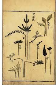 Botanical - Floral Design - Ikebana vol 1 arrangement Leaf Flowers, Botanical Flowers, Large Flowers, Botanical Art, Sunflower Leaves, Wood Sorrel, Marine Plants, Japanese Drawings, Leaf Illustration