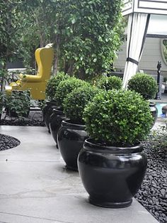 Topiaries. Is this at that kelly wearstler designed hotel?
