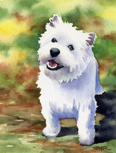 White WEST HIGHLAND TERRIER Dog Art Print Signed by k9artgallery   WATERCOLOR