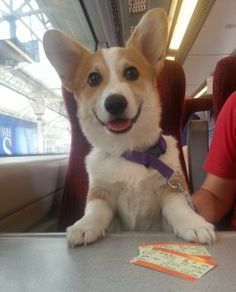 Dr. King Schultz – Corgi of the Day - Monday, July 28th