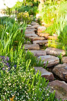 Designer: Carrie Latimer Style: Water Garden Type: Private Garden Area: Cape Town Garden Types, Garden Paths, Private Garden, Water Garden, Pathways, Carrie, Stepping Stones, Carry On, South Africa