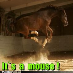 How do you react when YOU see a mouse?