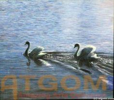 Swans - Birds Paintings