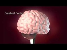 Effects Of Alcohol On The Brain - YouTube