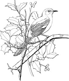 Northern Mockingbird Perched On A Tree Adult Coloring Page Bird