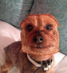 Dog who is also a loaf of whole wheat bread.