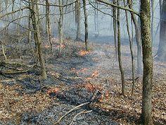 Control Burn escape http://www.amazon.com/Tapioca-Fire-Suzanne-Gilbert/dp/1492701173/ref=sr_1_1?ie=UTF8&qid=1384881539&sr=8-1&keywords=tapioca+fire