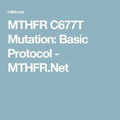 MTHFR C677T Mutation: Basic Protocol - MTHFR.Net