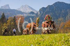 Traditioneller Reither Bauernmarkt Mit Almabtrieb Und Kirchtag