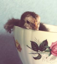 Just Chillin' In This Cup All rights reserved © Angelandspot