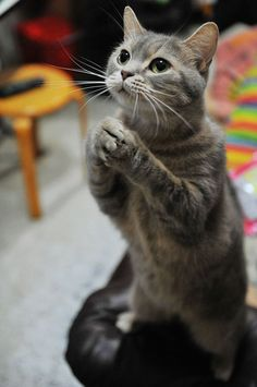 Funny animal pictures for this week, funny animal pictures, funny animals, animal pictures, cute animals Animals And Pets, Baby Animals, Funny Animals, Cute Animals, Wild Animals, Cute Kittens, Cats And Kittens, Kitty Cats, Grumpy Cats